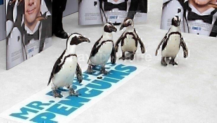 Mr Poppers Penguins Premiere_6_13_11_139